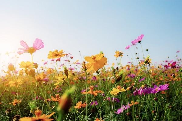 De lente: hetopleidingsseizoen bij uitstek